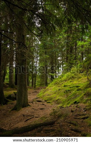In the fir-tree forest - stock photo