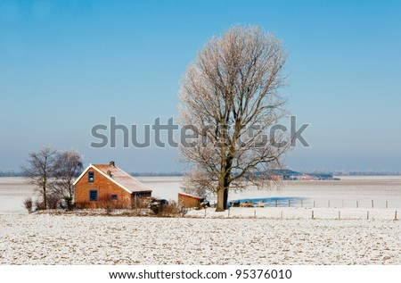 In the foreground a farmhouse and a tall tree and in the background the large barn. It is winter in the Netherlands and the first snow has fallen. - stock photo