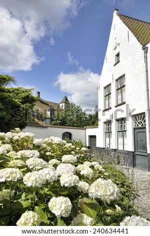 In the foreground white hydrangea, in the background an ancient white house typical of Bruges, Belgium - stock photo