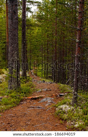 In the forest, Karelia, Russia