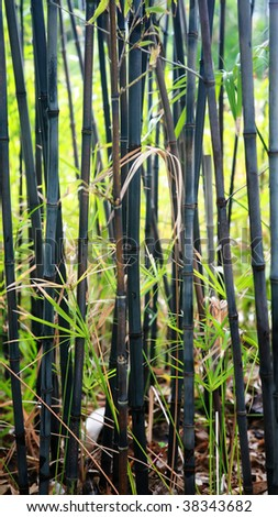 In the garden, the black bamboo smells of exotic flavour.