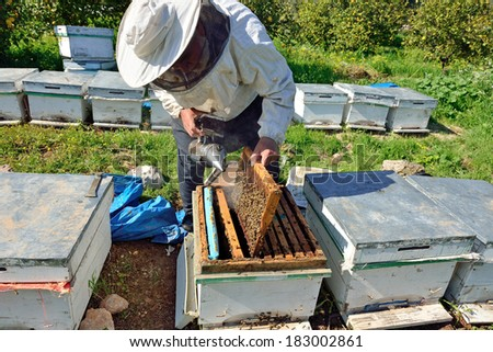 in the hands of beekeeper holding honeycomb