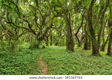 In the Jungle - A hiking footpath winding through a dense tropical rain-forest. - stock photo