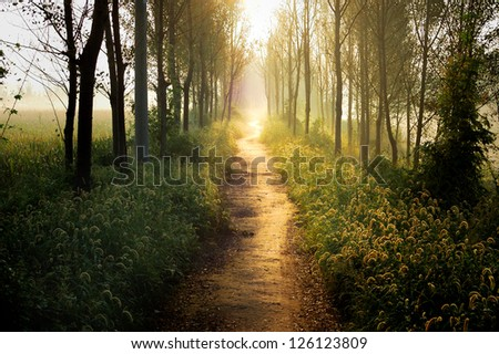 In the morning light, even the most common weeds are plants like Wonderland The same. - stock photo