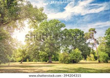 In the park - stock photo