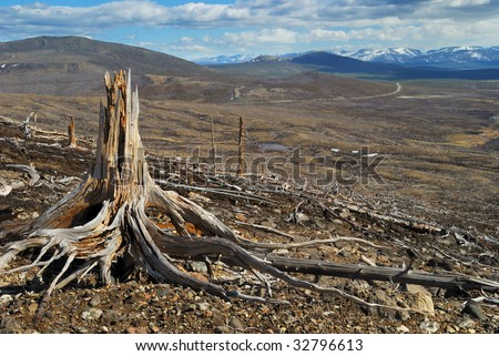 In the past here there was a taiga - stock photo