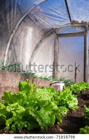 In the real greenhouse. Lettuce and onion visible. Artistic selective focus. - stock photo