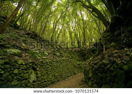 In the subtropical rain forest in the island of La Palma, Canary Islands