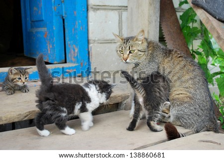 In the summer, bright sunny day in the yard, cat feeding kittens - stock photo
