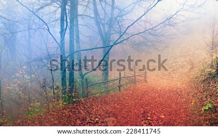 In the Transcarpathian Ukraine Carpathian mountains on the background autumn beech forests in the rain and fog fantastically beautiful - magical scenic color wild forests in natural reserves