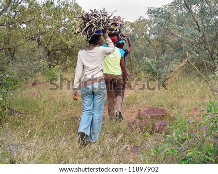 In the villages near Kalahari Desert the young girls still gather the firewood from the bush - stock photo