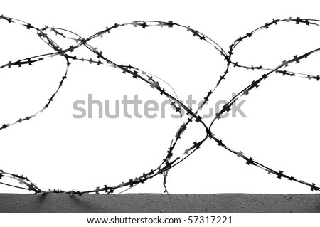 in this photograph shows the barbed wire on white background - stock photo