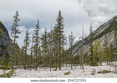 In this stony desert every tree is doomed to slow dying tree - stock photo