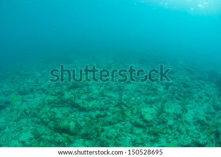 In very shallow south east florida waters. - stock photo