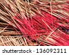 Incense stick - stock photo