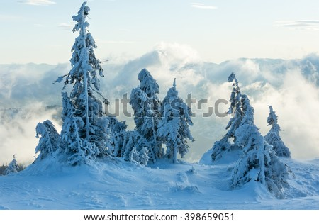 Inclined icy snowy fir trees in winter morning cloudy mountain. - stock photo