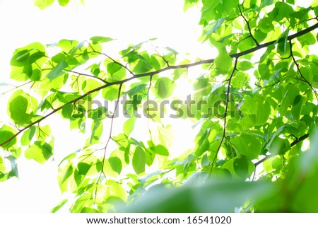 incredible green leaf foliage nature gbackground - stock photo