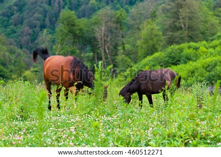 Incredible horses in mountain