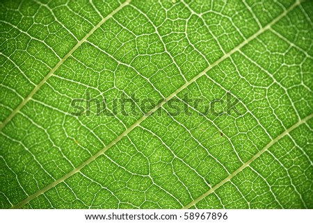 Incredible natural green background - stock photo