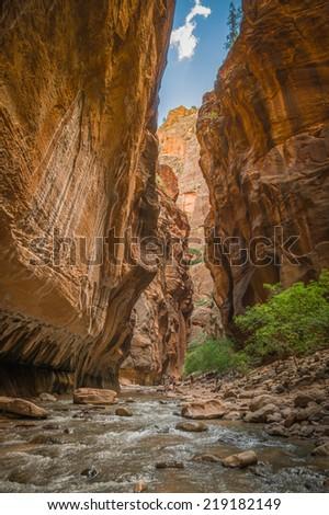 incredible nature in virgin river narrows  in zion national park utah in summer - stock photo
