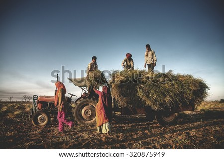 India Family Farming Harvesting Crops Harvesting Concept - stock photo