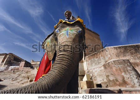India, Rajasthan, Jaipur, the Amber Fort, elephant driver - stock photo
