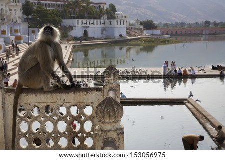 India, Rajasthan, Pushkar, an indian monkey looks at the pilgrims take a bath in the sacred lake - stock photo