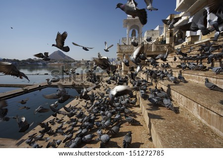 India, Rajasthan, Pushkar, view of the town and the sacred lake, crowded by pigeons - stock photo