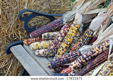 indian corn on bench