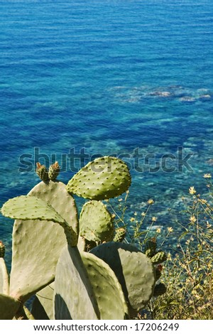 Indian fig plant overlooking Mediterranean sea. Copy space and shallow depth of field.