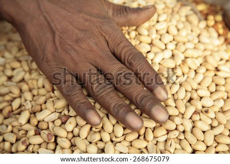 Indian hand on peeled nuts - stock photo
