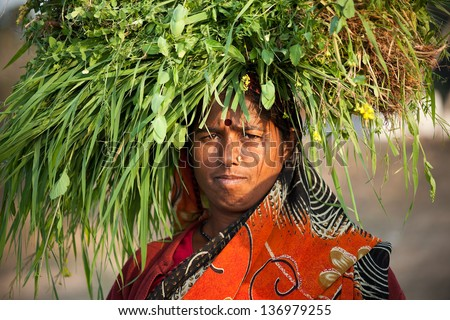 Indian happy villager woman carrying green grass over head - stock photo