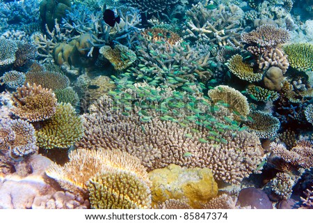 Indian ocean. Underwater world. Fishes in corals