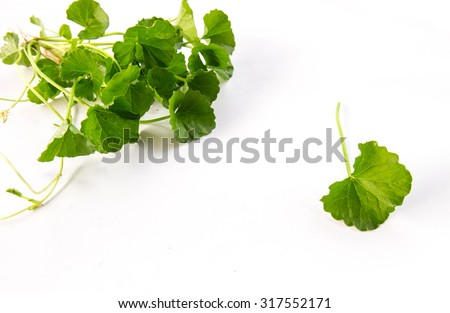 Indian pennywort (Centella asiatica) brain tonic herbal plant, white background. - stock photo