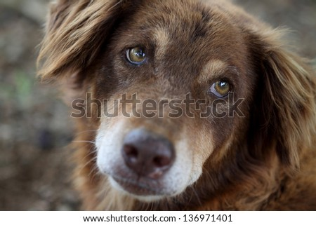 indian street dog - stock photo