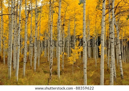 Indian summer in Colorado-12 - stock photo