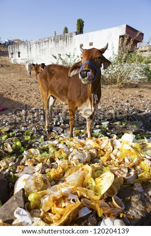 Indian waste disposal, India - stock photo