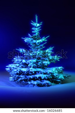 individual coniferous tree on celestial background, winter