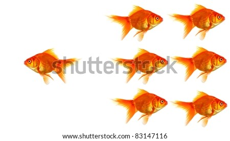 individual success winner outsider boss or motivation concept with goldfish isolated on white - stock photo