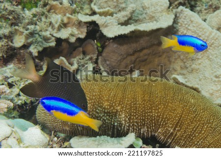 Indonesia corals house for Fishes close up portrait - stock photo