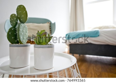 Indoor cactuses in white plant pots in a beautiful modern pastel colour bedroom with wooden floor