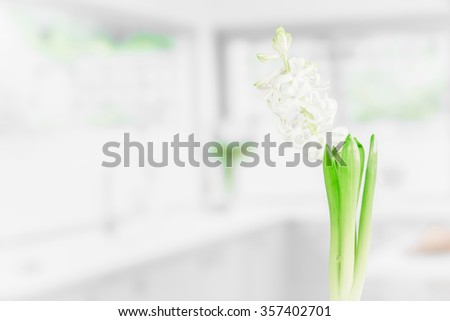 Indoor flower in a bright kitchen in the spring