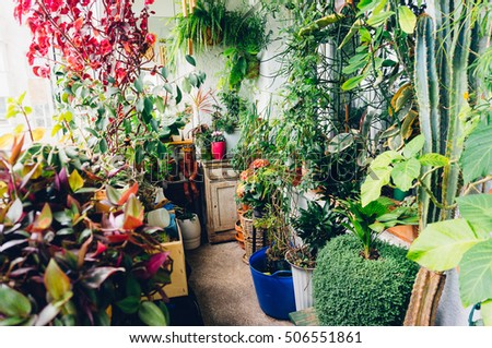 Indoor Garden Sunny Apartment Room Stock Photo (Safe to Use ...