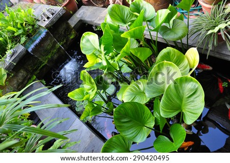 Indoor garden with artificial waterfall, carp fish and green plant - stock photo