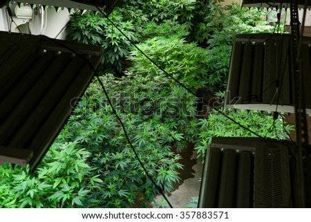 Indoor grow room from above - stock photo