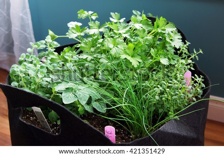 Indoor heb garden with thyme, chive, oregano, parsley and tomato plant