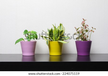 Indoor ornamental plants in colorful pots - stock photo
