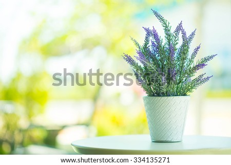 Indoor plant pot on the table - stock photo
