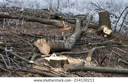 Industrial deforestation and logging. - stock photo