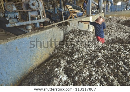 industrial fish in fish meal factory - stock photo